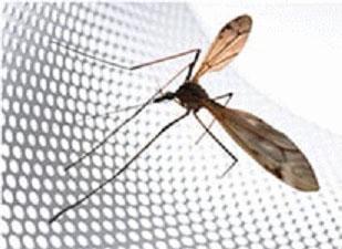 kolgotki_ot_komarov